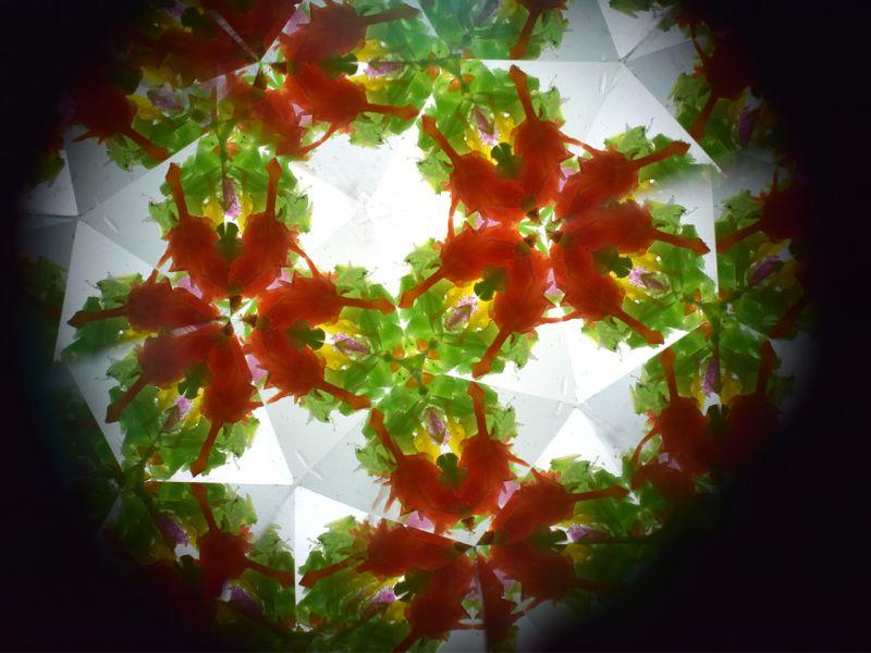 Kaleidoskop »Wilde Tiere«